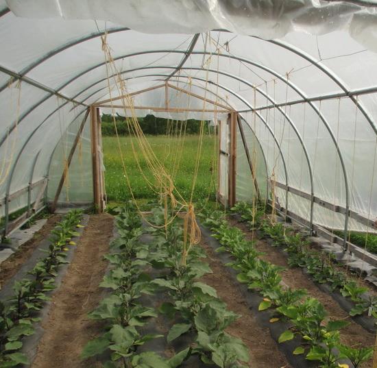 Тепличное овощеводство бизнес план самые свежие бизнес идеи